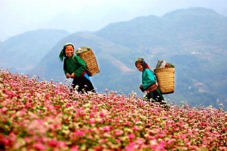 Du lịch Hà Giang Ghép Đoàn: Hà Nội - Hà Giang – Quản Bạ Yên Minh – Đồng Văn